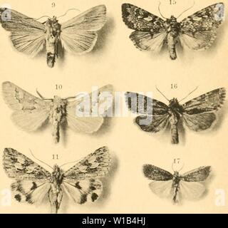 Archive image from page 314 of Deutsche entomologische Zeitschrift Iris (1902). Deutsche entomologische Zeitschrift Iris . deutscheentomolo191906ento Year: 1902 - Stock Photo