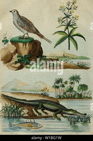 Archive image from page 391 of Dictionnaire pittoresque d'histoire naturelle et - Stock Photo