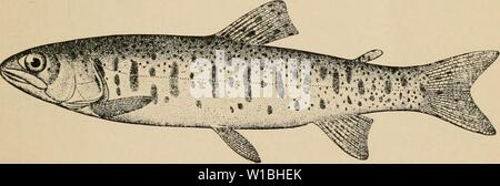 Archive image from page 40 of The determined angler and the - Stock Photo