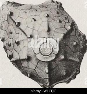 Archive image from page 626 of The Devonian crinoids of the - Stock Photo