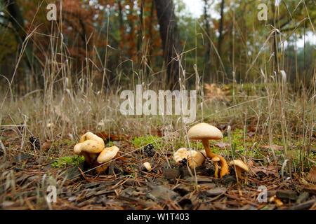 Pilze am Waldrand - Stock Photo