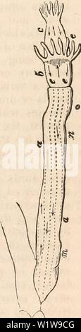 Archive image from page 626 of The cyclopædia of anatomy and - Stock Photo