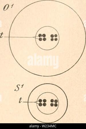 Archive image from page 133 of Das werden der organismen zur - Stock Photo