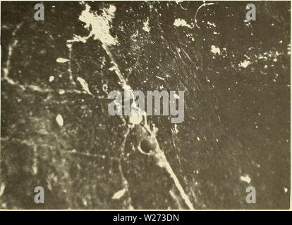 Archive image from page 36 of Deep-ocean biodeterioration of materials (1965). Deep-ocean biodeterioration of materials  deepoceanbiodete02mura Year: 1965  Figure B-10. A marine borer (center) boring into a plastic tape wrapped over plastic rod. (magnified) - Stock Photo