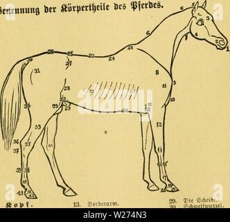 Archive image from page 39 of Das pferd Ein buch für. Das pferd. Ein buch für das volk, enthaltend:  daspferdeinbuchf01pitc Year: 1881  3g ®a§ :tferb. nirf,t in m arofeer ile su fein, nm 61jcu ju gelangcn, lonbern c§ trocfen ert iaft « f<e nit in Eraftigev ®ef«..bf,eit «nb em.m 34ta. nal., in ban fie on «tkit ba8 aeufeerfle tioMvinaen tonnen. Stncnnuiis ict abr|.ttt|cilt ito (ncS.    1. gjiunb. 2. tiiftern. 3. ajovbcr=Sopi. 4. Kiefer. 5. dcitcl. 6. 6. Wliljne. 7. iiujlrotivc. jB It V )» e 11 D e i I . 8. djuttcrttatt. 9. Sovbctfte pilje bcr d)uUer. 10. Sruft. 11. 11. .?)ufte-, , 12. (SUboge - Stock Photo