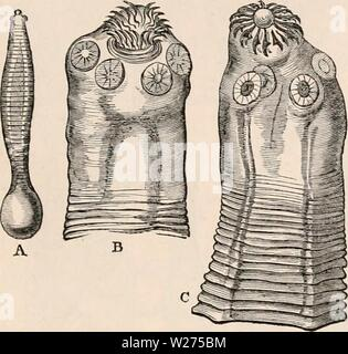 Archive image from page 40 of The cyclopædia of anatomy and - Stock Photo