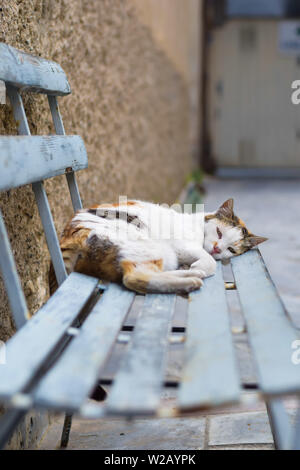 sleeping street cat on a bench in italy - Stock Photo