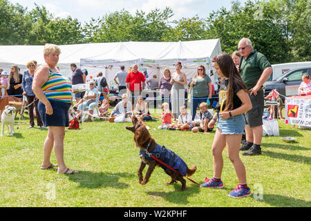 Catch a sausage competition in the dog show at Stockton Heath Festival 2019 - Stock Photo