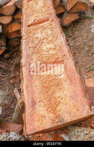 Processing of palm trunks. Mortising the troughs into a tree trunk. Manual production of wooden gutters for sea salt production.Wood chips and shaving - Stock Photo