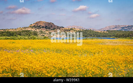 A field of Coreopsis with Little Baldy and Quannah Parker Lake in the distance. Wichita Mountains, Cache, OK, USA - Stock Photo