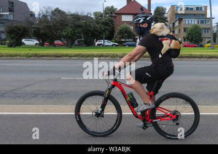 Melbourne Australia: Bike rider with his pet dog as a passenger on his back. - Stock Photo