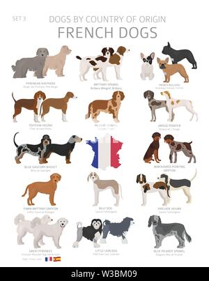 Dogs by country of origin. French dog breeds. Shepherds, hunting, herding, toy, working and service dogs  set.  Vector illustration - Stock Photo