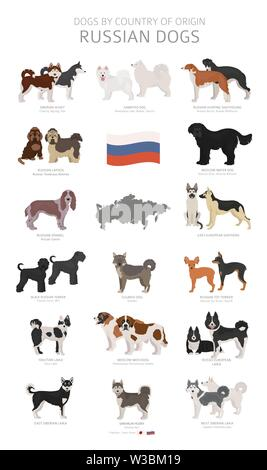 Dogs by country of origin. Russian dog breeds. Shepherds, hunting, herding, toy, working and service dogs  set.  Vector illustration - Stock Photo