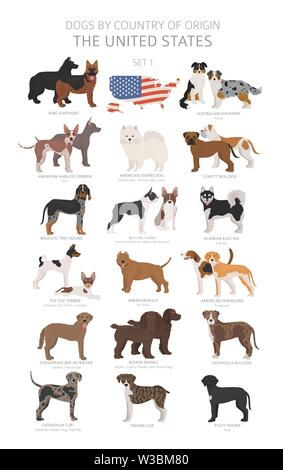 Dogs by country of origin. Dog breeds from the United states of America. Shepherds, hunting, herding, toy, working and service dogs  set.  Vector illu - Stock Photo