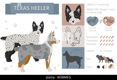 Designer, crossbreed, hybrid mix dogs collection isolated on white. Flat style clipart set. Vector illustration - Stock Photo