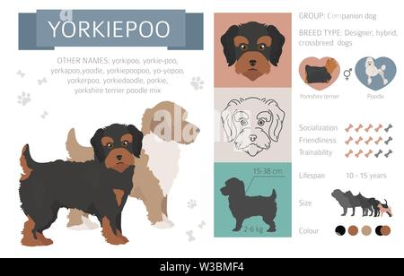 Designer dogs, crossbreed, hybrid mix pooches collection isolated on white. Flat style clipart infographic. Vector illustration - Stock Photo