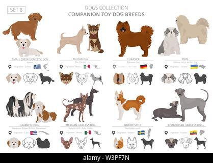 Companion and miniature toy dogs collection isolated on white. Flat style. Different color and country of origin. Vector illustration - Stock Photo