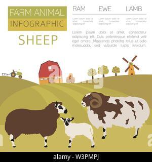 Sheep farming infographic template. Ram, ewe, lamb family. Flat design. Vector illustration - Stock Photo