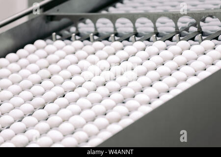 Egg industry. Conveyor transporting lot of fresh eggs on an organic chicken farm - Stock Photo