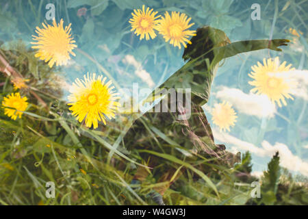 Double exposure of dancing little girl and dandelions on a meadow - Stock Photo