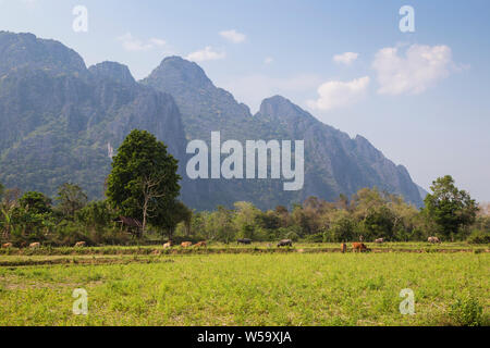 Beautiful view of cows grazing, farmland and steep karst limestone mountains near Vang Vieng, Vientiane Province, Laos, on a sunny day. - Stock Photo