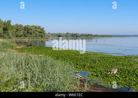 Lake Chiemsee, july, nature reserve Hirschauer Bucht, Bavaria, Germany - Stock Photo