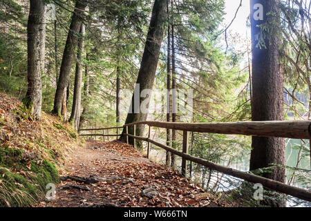 footpath through autumn forest. wooden fence along the path. lake synevyr behind the trees on the right. wine sunny weather. good time spent on open a - Stock Photo