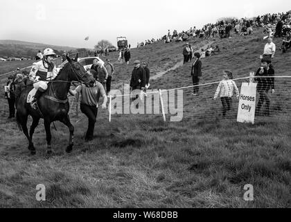 four burrow hunt point to point horse race 2019 - Stock Photo