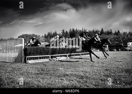 horses jumping over fences at the four burrow hunt point to point horse race 2019 - Stock Photo