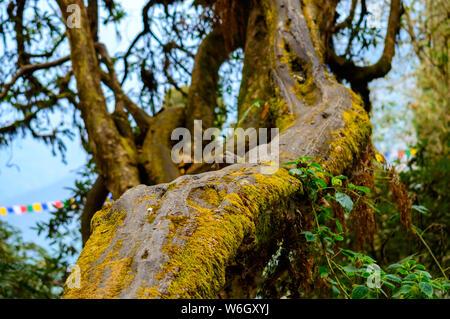moss covered tree - Stock Photo