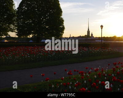 The Peter and Paul Fortress at the early morning, summer, white nights, Saint-Petersburg, flowerbeds, calm sky - Stock Photo