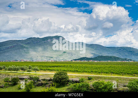 Montenegro, Wide green vineyards of wine region of podgorica city next to houses and mountains in stunning nature landscape - Stock Photo