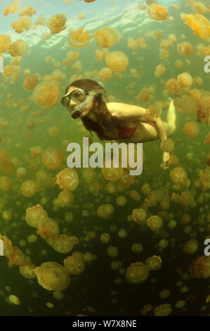 Woman swimming in a marine lake among thousands of Golden jellyfish (Mastigias papua etpisoni), subspecies of the spotted jellyfish living in the nearby lagoons.  Eil Malk island, Koror, Palau. Philippine Sea. - Stock Photo