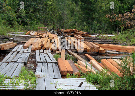 Timber from area of deforested land, area deforested for rubber tapping. Central Kalimantan,  Indonesian Borneo. June 2010. - Stock Photo