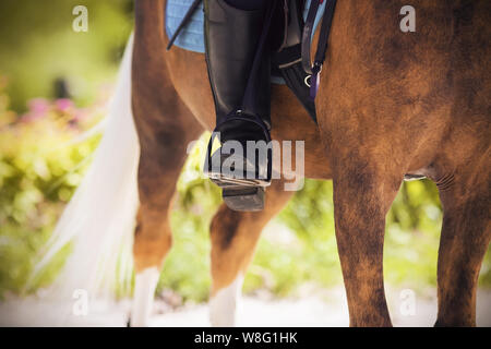 Leg rider in the stirrup, sitting astride a horse suit palomino on a Sunny summer day. - Stock Photo