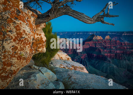 Sunset at Bright Angel Point on the North Rim of the Grand Canyon, Arizona ..... The Grand Canyon is a steep-sided canyon carved by the Colorado River - Stock Photo