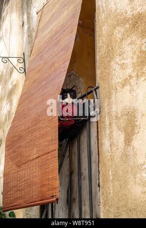 Sleepy cat on a shaded house balcony in French village - Stock Photo