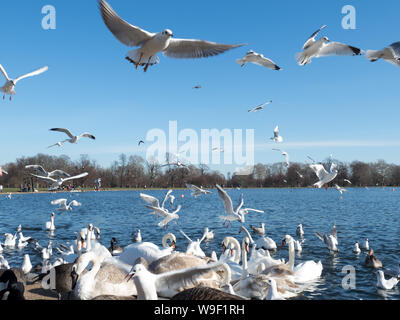 A flock of seagulls flying against blue sky and lake in a park as a background - Stock Photo