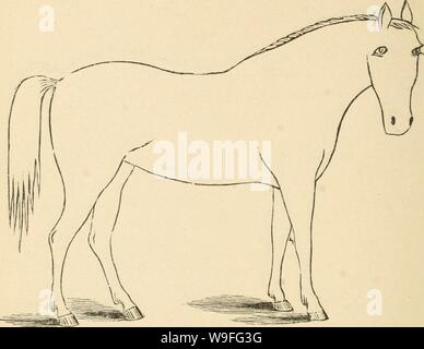 Archive image from page 39 of Cunningham's device for stockmen and. Cunningham's device for stockmen and farmers  cunninghamsdevic00cunn Year: 1882 ( DESCRIPTION Color Marks Height, - Stock Photo