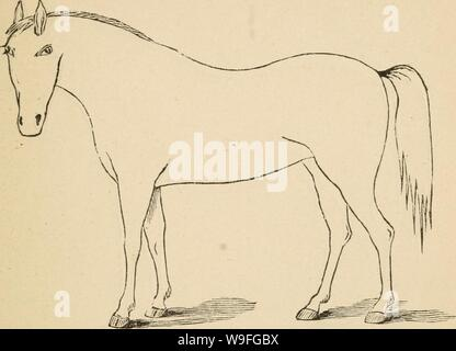 Archive image from page 40 of Cunningham's device for stockmen and. Cunningham's device for stockmen and farmers  cunninghamsdevic00cunn Year: 1882 ( DESCRIPTION Defects Brand. - Stock Photo