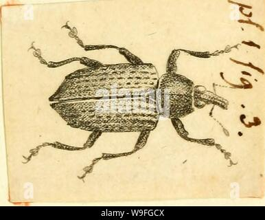 Archive image from page 40 of [Curculionidae] (1800) - Stock Photo