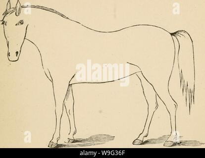 Archive image from page 100 of Cunningham's device for stockmen and. Cunningham's device for stockmen and farmers  cunninghamsdevic00cunn Year: 1882 ( Defects Brand. DESCRIPTION - Stock Photo