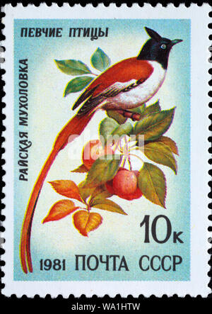 Indian Paradise Flycatcher, Terpsiphone paradisi, Song bird, postage stamp, Russia, USSR, 1981 - Stock Photo