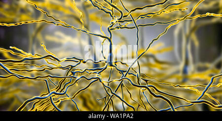 Pyramidal neurons. Illustration of pyramidal nerve cells from the cerebral cortex of the brain. Pyramidal cells are so named for their triangular cell bodies. Each cell body has numerous processes (dendrites) that collect and transmit information from other nerve cells and sensory cells. Each cell body also has an axon leading from it, through which it passes information to other cells. - Stock Photo