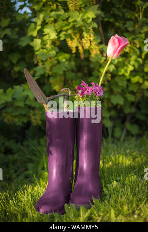gardening with tools in rubber boots and green bush background - Stock Photo