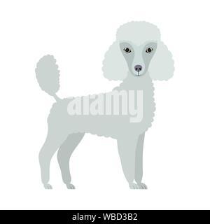 cute poodle dog on white background - Stock Photo