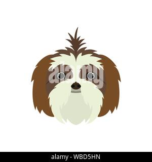 head of cute shih tzu dog on white background - Stock Photo