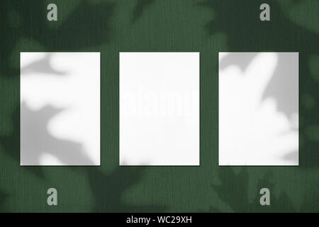Three empty white vertical rectangle poster mockups with soft shadows of maple tree leaves on dark green colored concrete wall background. Flat lay, t - Stock Photo