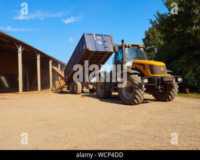 A JCB Fastrac and trailer emptying its load of wheat up a Fyson elevator in to temporary storage in a farm yard - Stock Photo