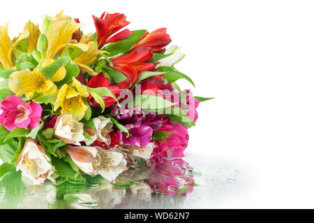 Multicolored alstroemeria flowers bouquet on white mirror background in water drops isolated closeup, lily flowers holiday poster greeting card design - Stock Photo